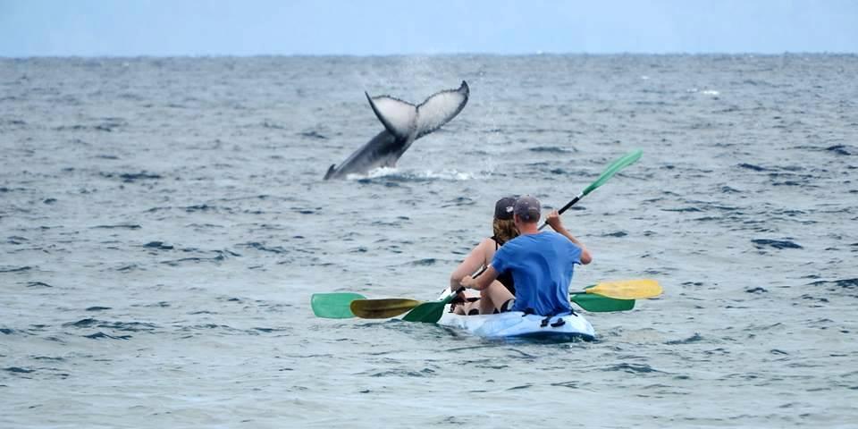 Bon endroit baleine