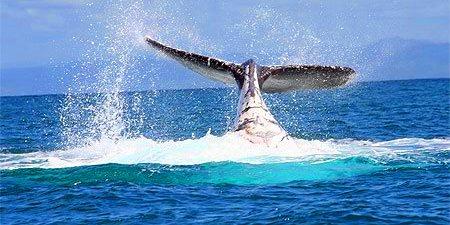 Hotel la baleine sainte marie