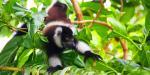 Lemurien sainte marie