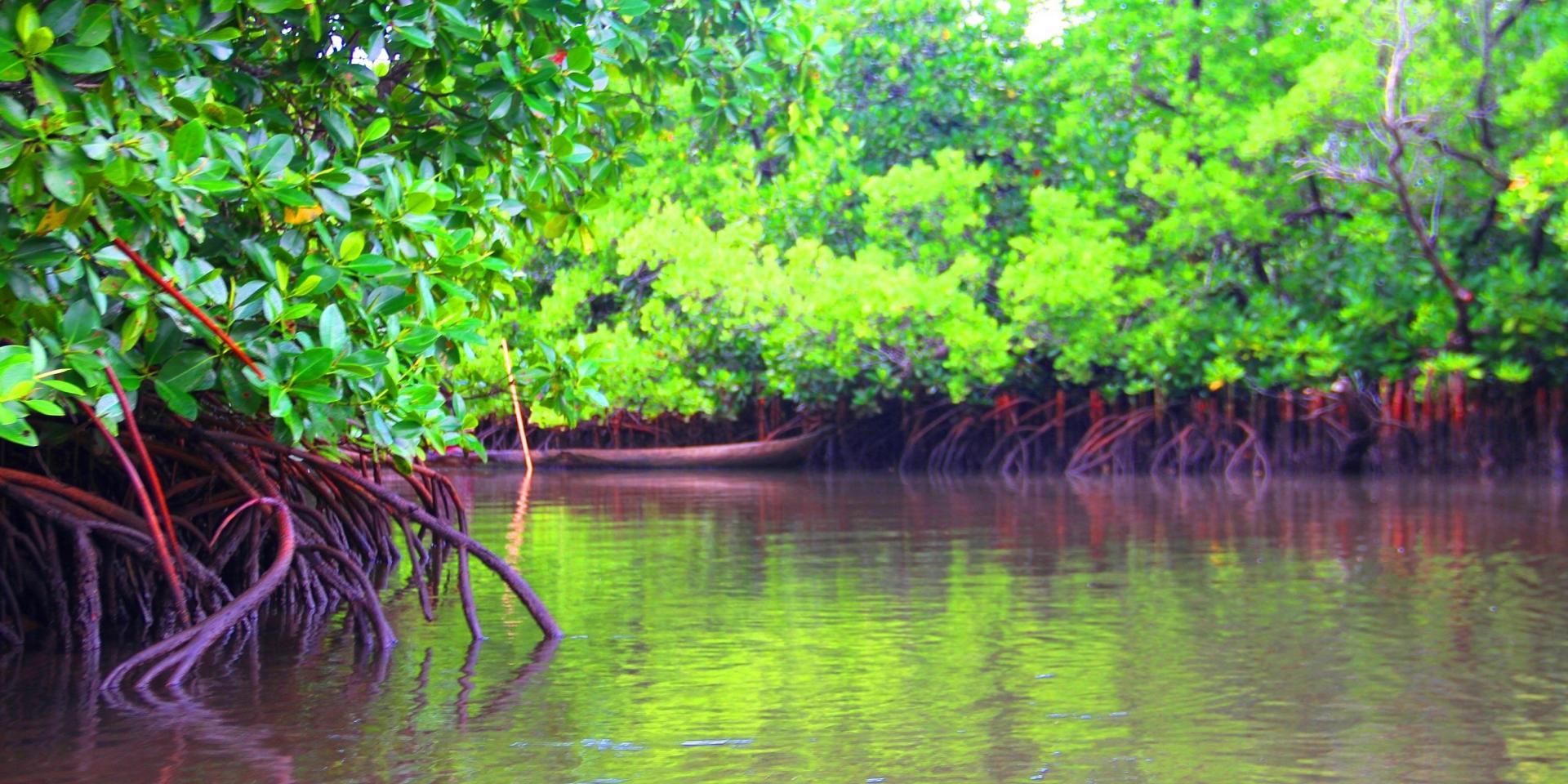 Mangrove sainte marie