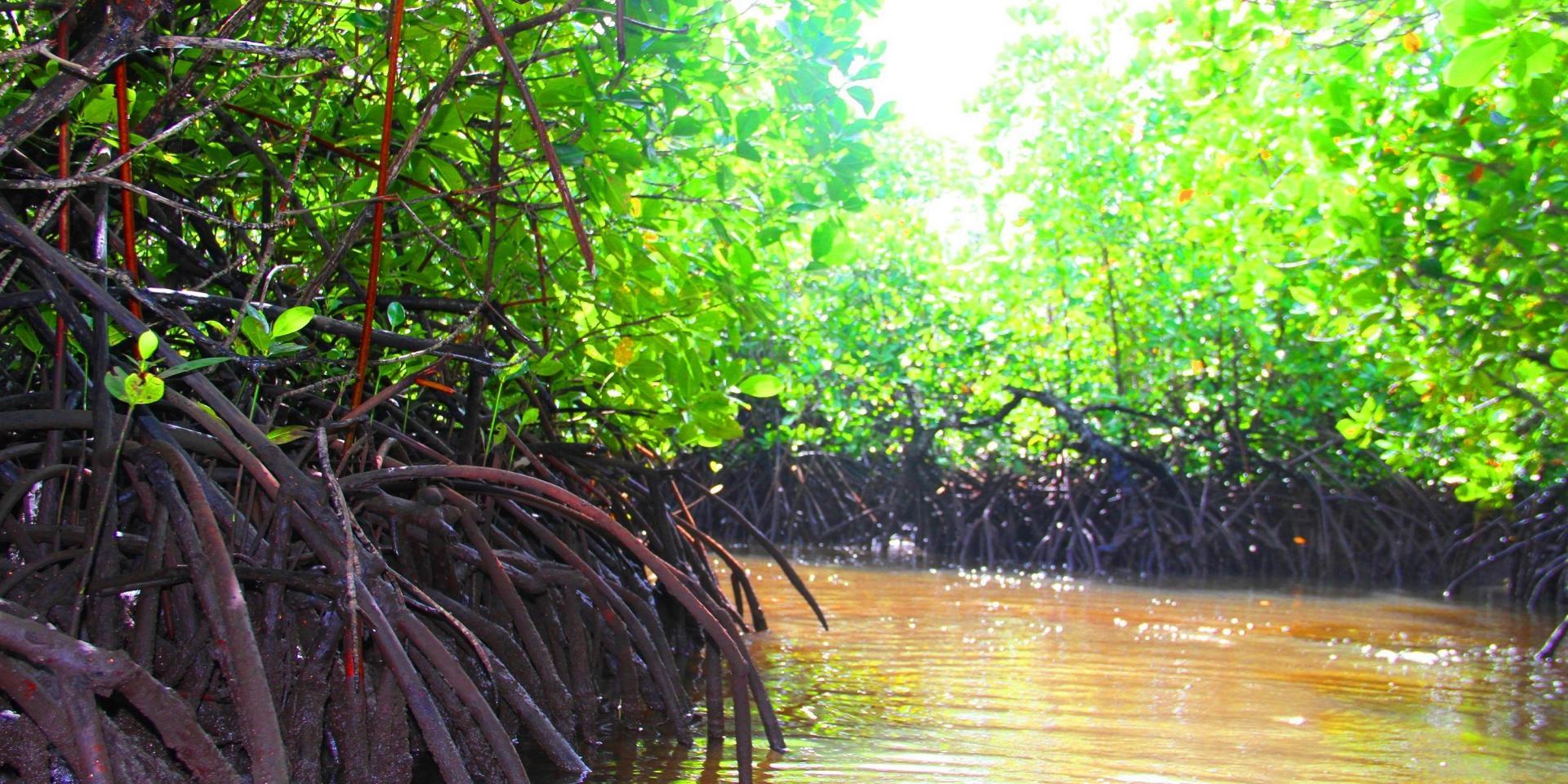 Sainte marie mangrove