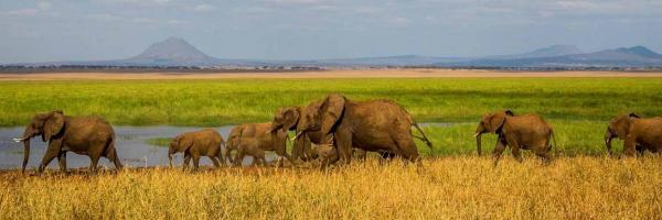 Tanzanie safari